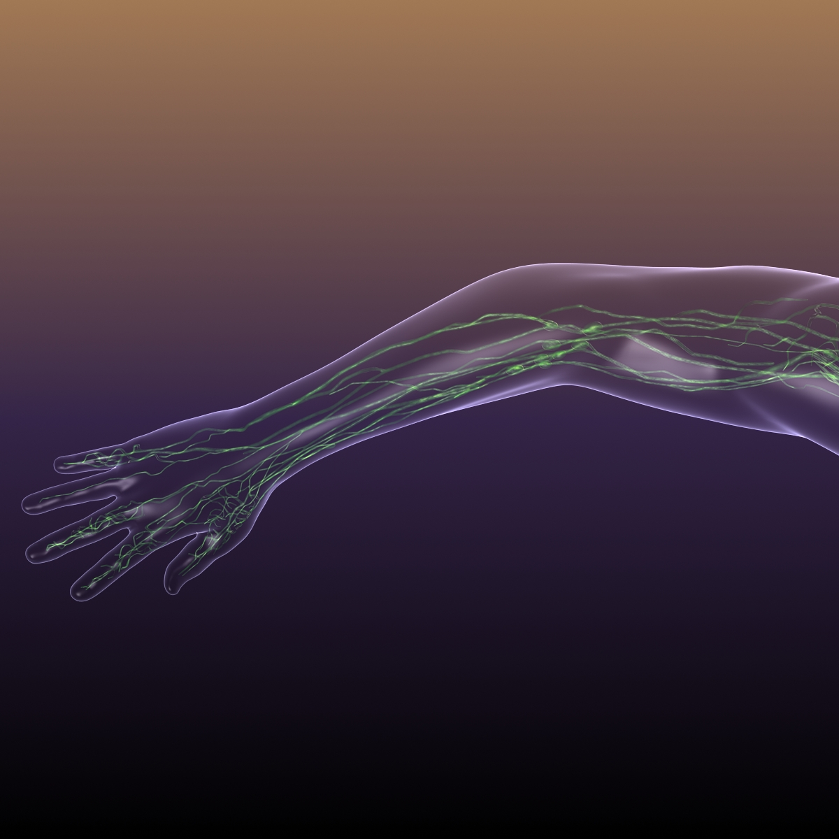 lymphatic system in human body 3d model 3ds max fbx c4d dae ma mb 3dm  obj 170720