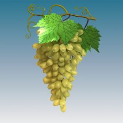 Grapes Cluster Green 3d model 3ds max fbx c4d lwo lws lw obj