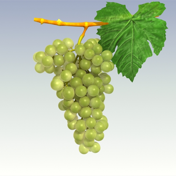 green grapes 3d model 3ds max fbx lwo texture obj 204241