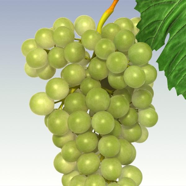 green grapes 3d model 3ds max fbx lwo texture obj 204242