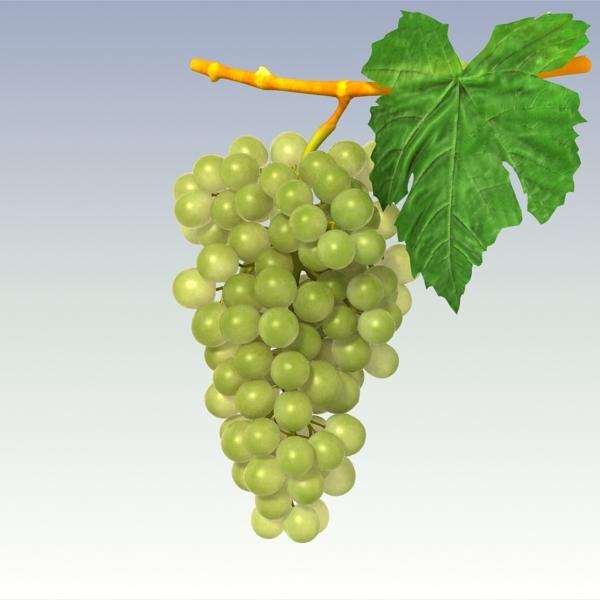 green grapes 3d model 3ds max fbx lwo texture obj 204243