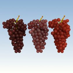 Grapes Red ( 528.77KB jpg by NoNgon )