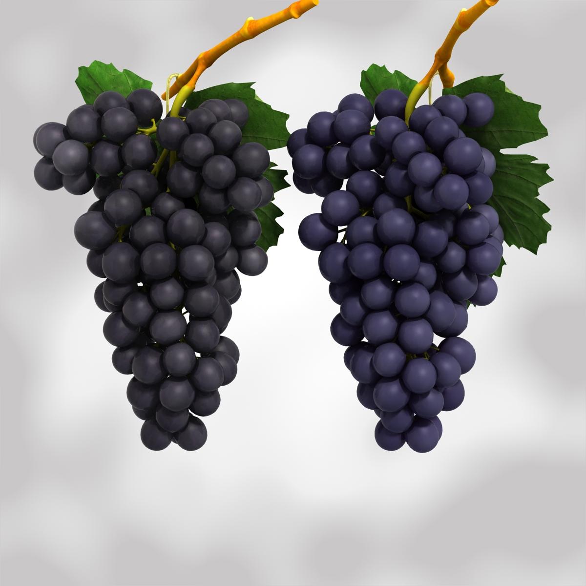 vīnogas melnā un zilā krāsā 3d modelis 3ds max fbx c4d obj 204266
