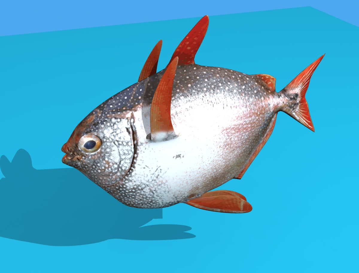 Opah Fish 3d model max fbx obj 211554