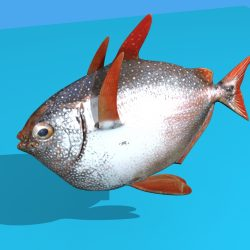 Opah Fish ( 452.02KB jpg by emiliogallo )
