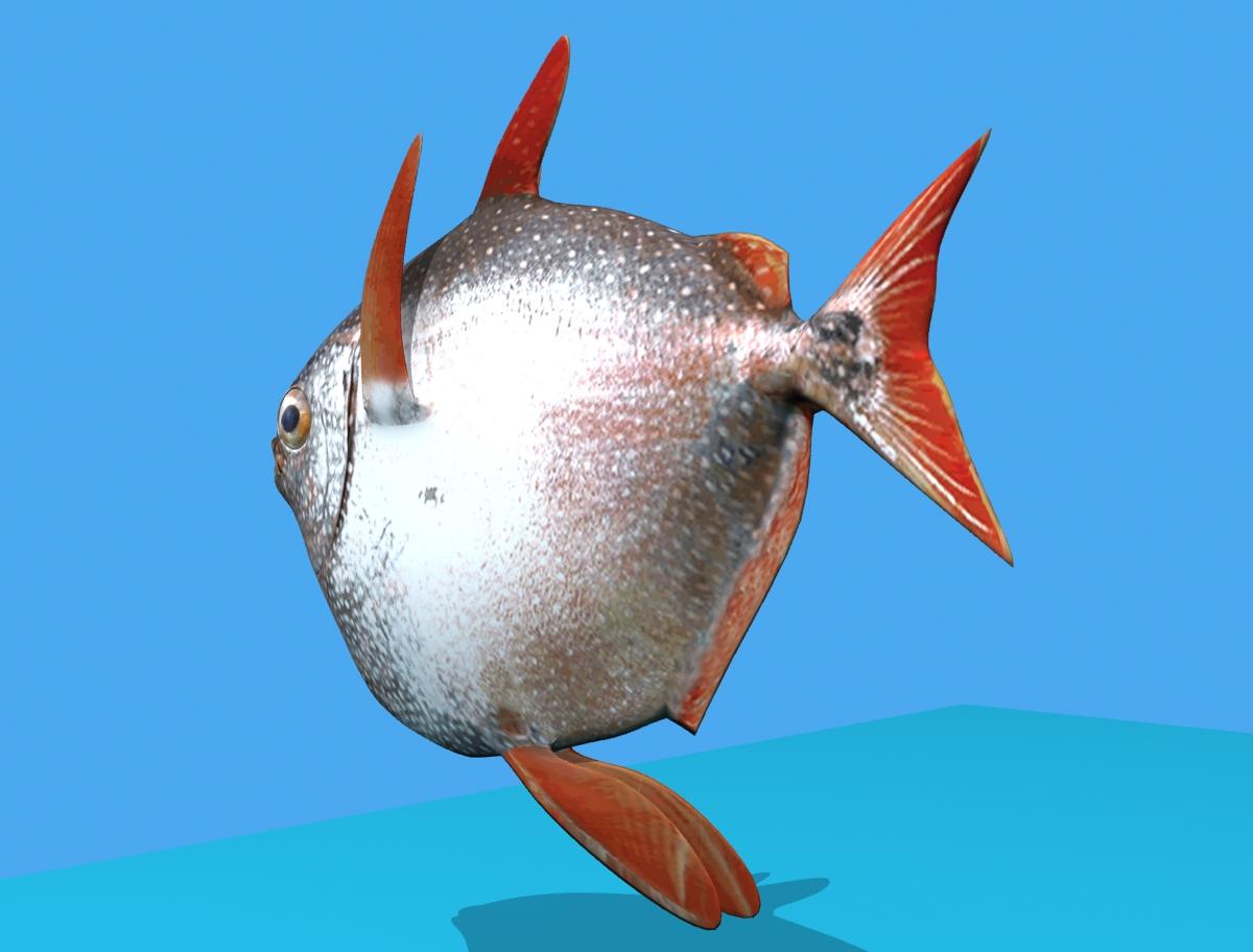opah fish 3d model max fbx obj 211555