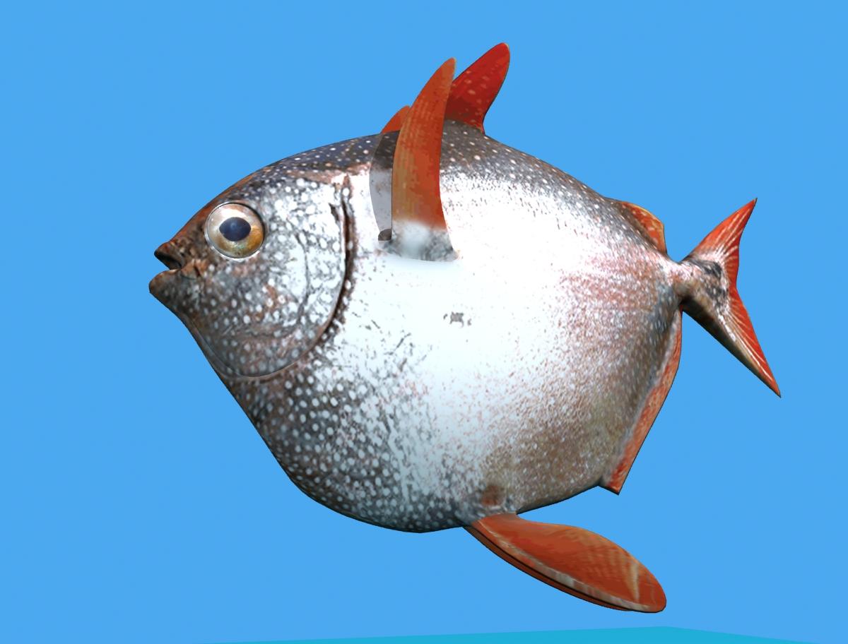 opah fish 3d model max fbx obj 211556