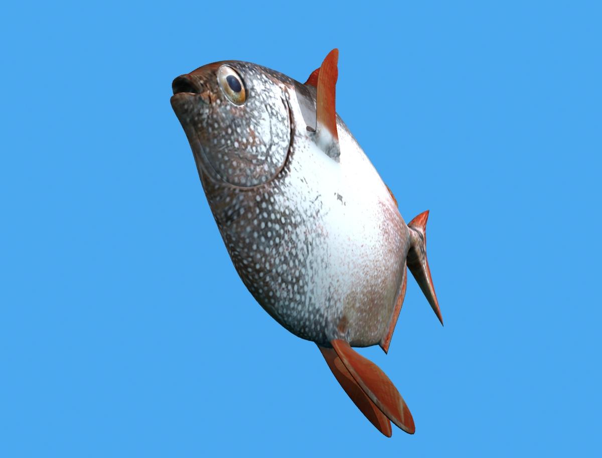opah fish 3d model max fbx obj 211557