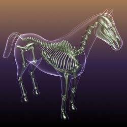 Horse Skeleton Anatomy in Body 3d model 0