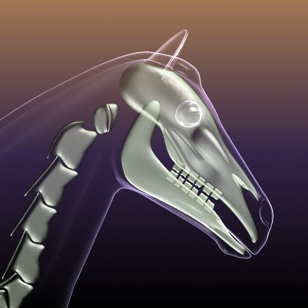 horse skeleton anatomy in body 3d model 3ds max dxf fbx c4d dae lwo hrc xsi  obj 213267