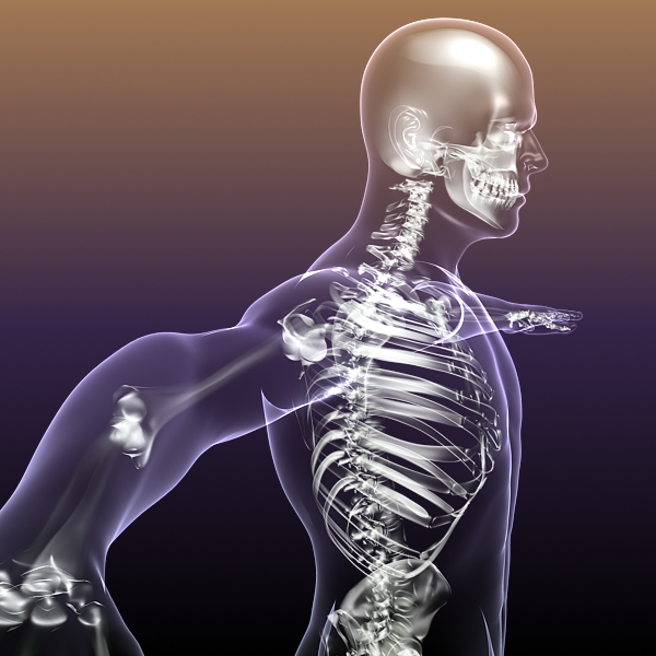 human skeleton in body 3d model 3ds max fbx c4d  obj 213407