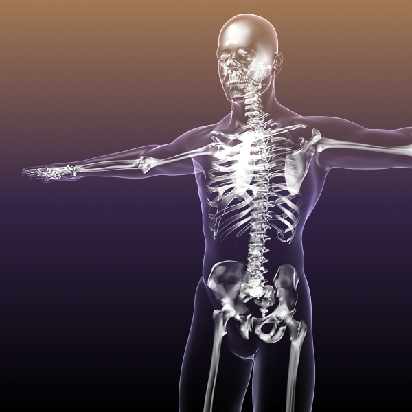 Human Skeleton In Body 3d Model Buy Human Skeleton In Body 3d
