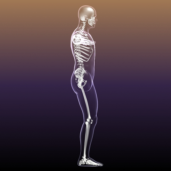 human skeleton in body 3d model 3ds max fbx c4d  obj 213408