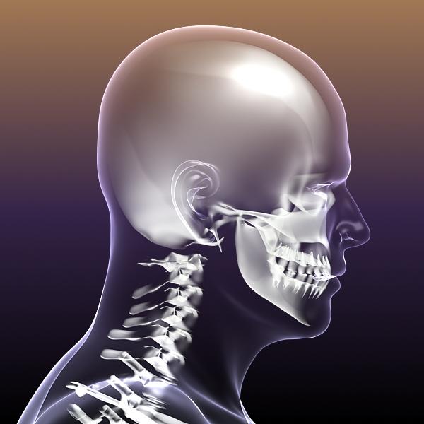 Human Skeleton in Body 3d model 3ds max fbx c4d  obj