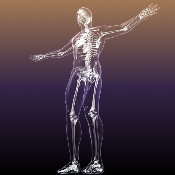 human skeleton in body 3d model 3ds max fbx c4d  obj 213413