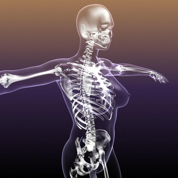 female skeleton inside woman body 3d model 3ds max fbx c4d lwo 3dm  obj 213427