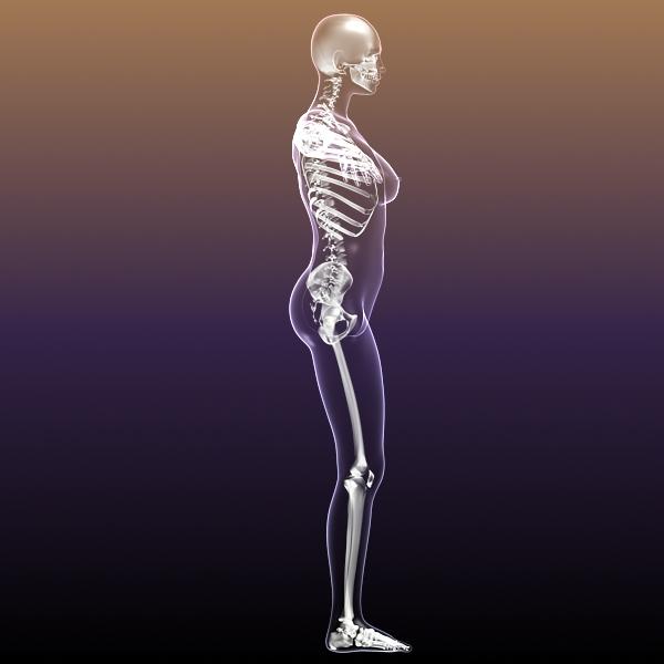female skeleton inside woman body 3d model 3ds max fbx c4d lwo 3dm  obj 213428