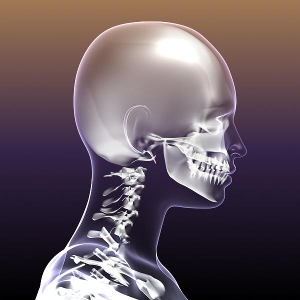 female skeleton inside woman body 3d model 3ds max fbx c4d lwo 3dm  obj 213429