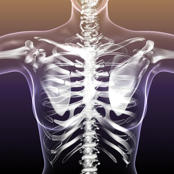 female skeleton inside woman body 3d model 3ds max fbx c4d lwo 3dm  obj 213431