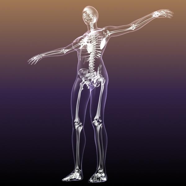 female skeleton inside woman body 3d model 3ds max fbx c4d lwo 3dm  obj 213433