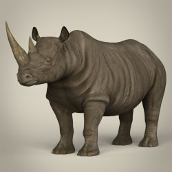 Realistic Rhinoceros 3d model 0