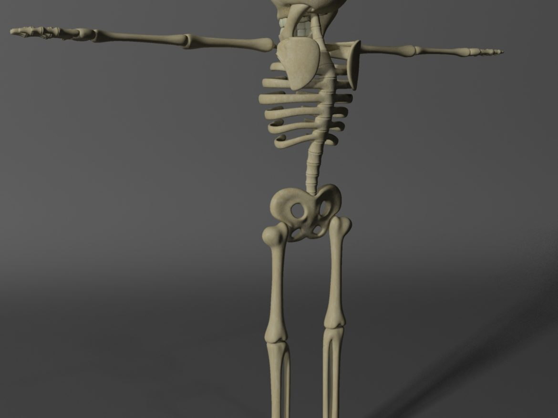 Cartoon Skeleton Rigged ( 360.84KB jpg by supercigale )