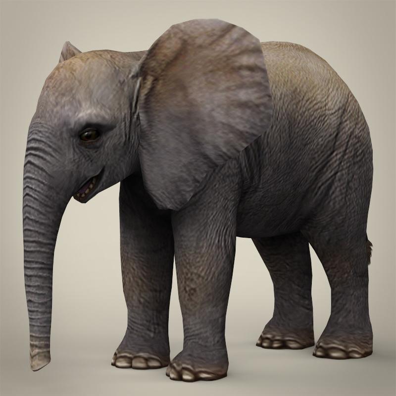 low poly realistic baby elephant 3d model 3ds max fbx c4d lwo ma mb obj 215149