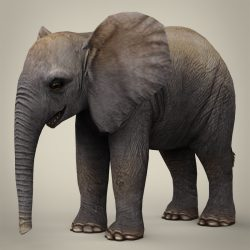 Low Poly Realistic Baby Elephant 3d model 0