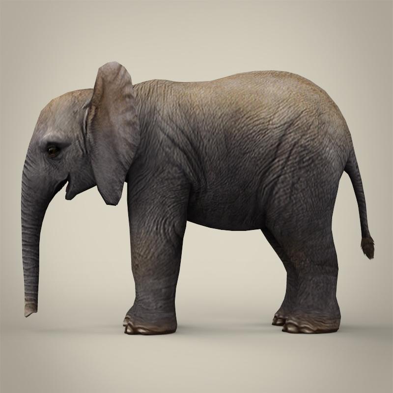 low poly realistic baby elephant 3d model 3ds max fbx c4d lwo ma mb obj 215151