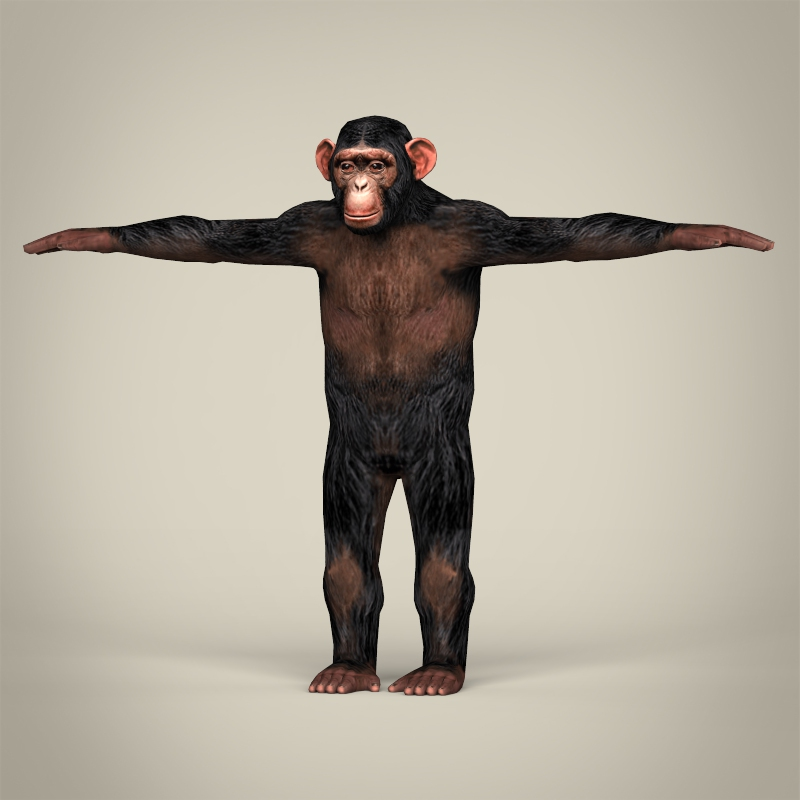 low poly realistic chimpanzee 3d model 3ds max fbx c4d lwo ma mb obj 215373