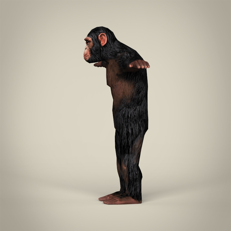 low poly realistic chimpanzee 3d model 3ds max fbx c4d lwo ma mb obj 215375