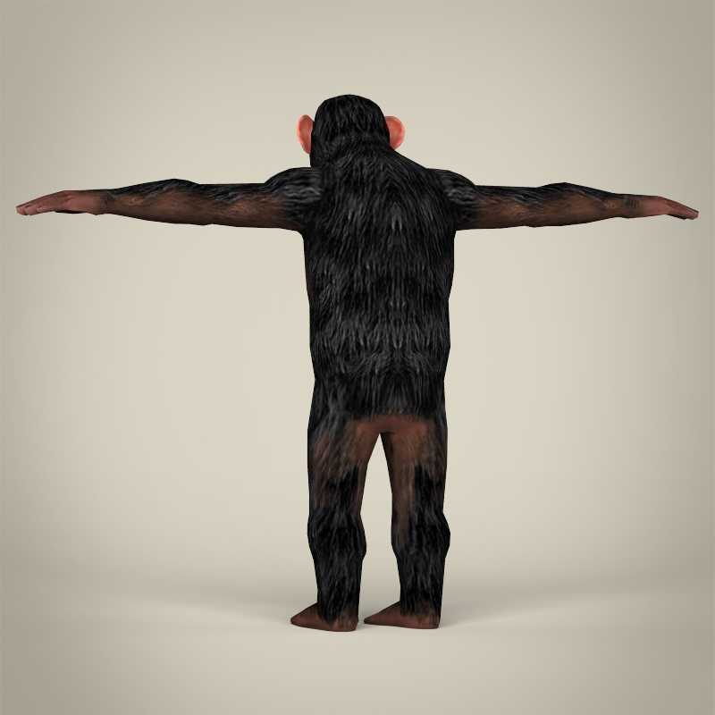 low poly realistic chimpanzee 3d model 3ds max fbx c4d lwo ma mb obj 215376