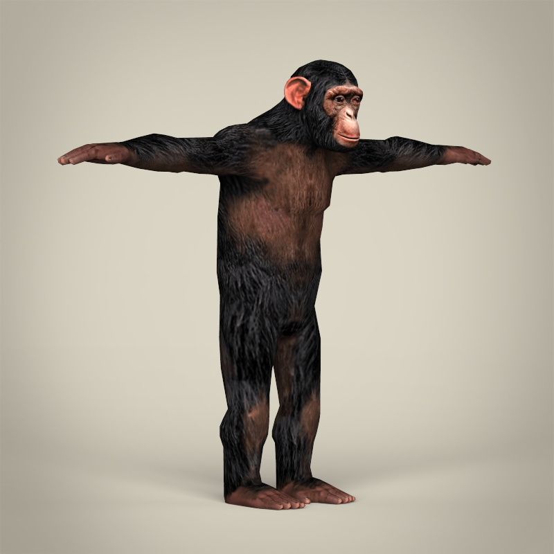 low poly realistic chimpanzee 3d model 3ds max fbx c4d lwo ma mb obj 215378