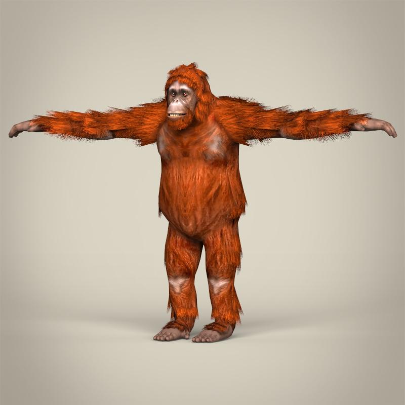 low poly realistic orangutan 3d model 3ds max fbx c4d lwo ma mb obj 215451