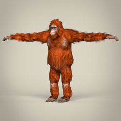Low Poly Realistic Orangutan 3d model 0