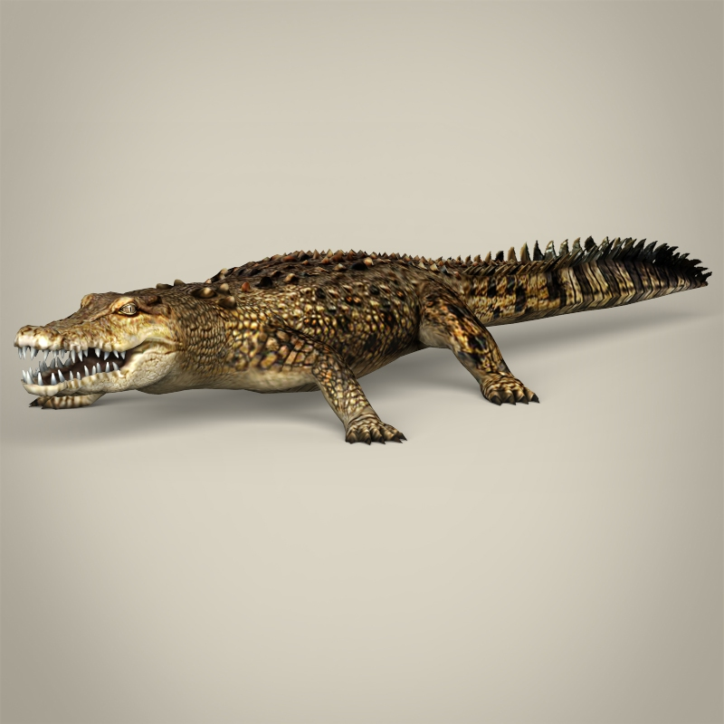 low poly realistic crocodile 3d model 3ds max fbx c4d lwo ma mb obj 215460