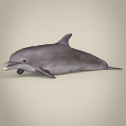 Low Poly Realistic Dolphin 3d model 3ds max fbx c4d lwo lws lw ma mb obj