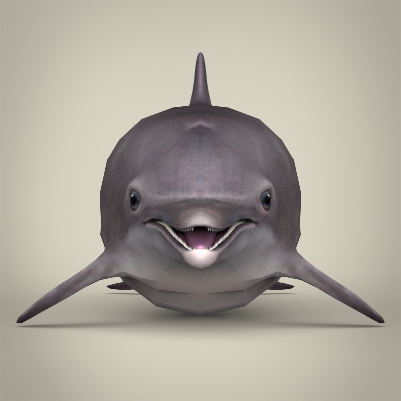 low poly realistic dolphin 3d model 3ds max fbx c4d lwo ma mb obj 216568