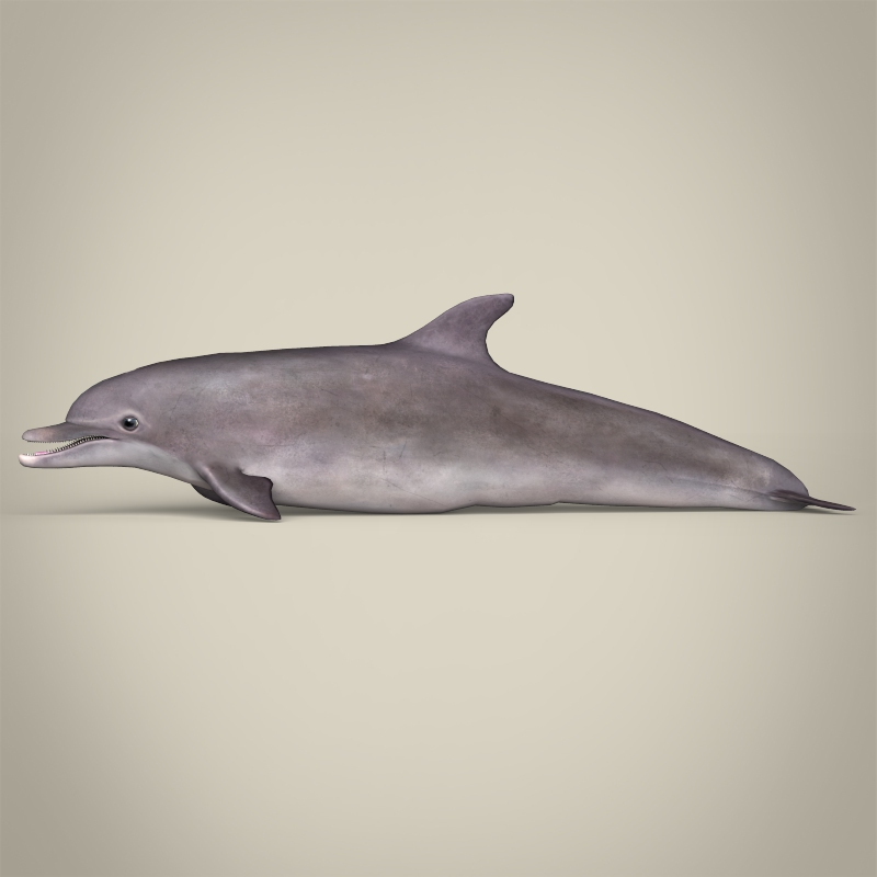 low poly realistic dolphin 3d model 3ds max fbx c4d lwo ma mb obj 216569