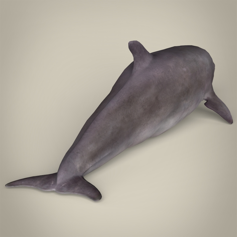 low poly realistic dolphin 3d model 3ds max fbx c4d lwo ma mb obj 216572