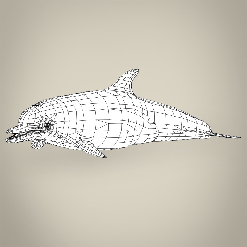 low poly realistic dolphin 3d model 3ds max fbx c4d lwo ma mb obj 216574