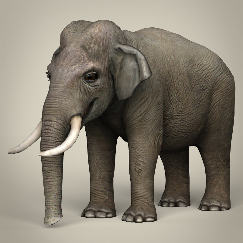 low poly realistic elephant 3d model 3ds max fbx c4d lwo ma mb obj 216576