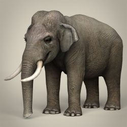 Low Poly Realistic Elephant 3d model 0
