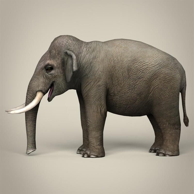 low poly realistic elephant 3d model 3ds max fbx c4d lwo ma mb obj 216578