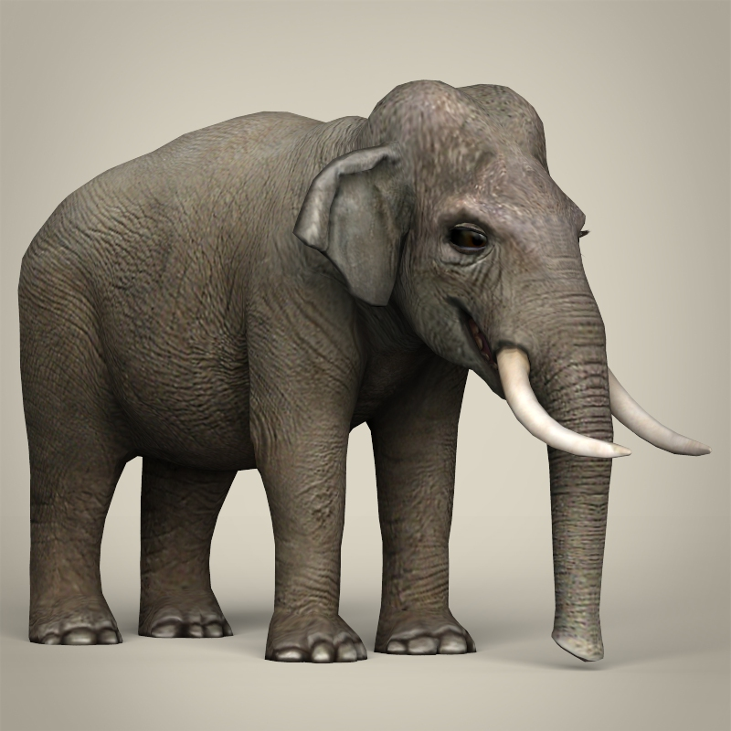 low poly realistic elephant 3d model 3ds max fbx c4d lwo ma mb obj 216581