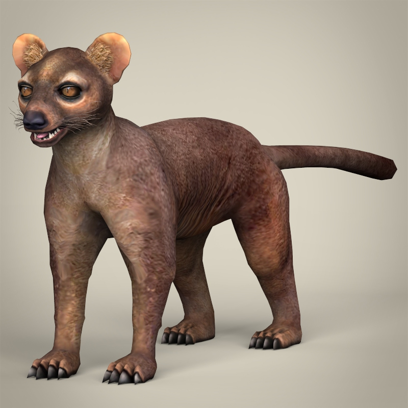 low poly realistic fossa 3d model 3ds max fbx c4d lwo ma mb obj 216585