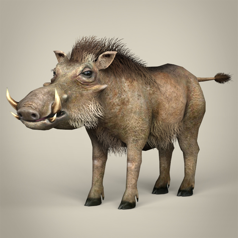 low poly realistic warthog 3d model 3ds max fbx c4d lwo ma mb obj 216725