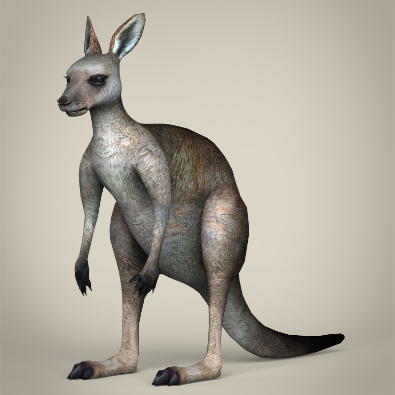 low poly realistic kangaroo 3d model 3ds max fbx c4d lwo ma mb obj 216734