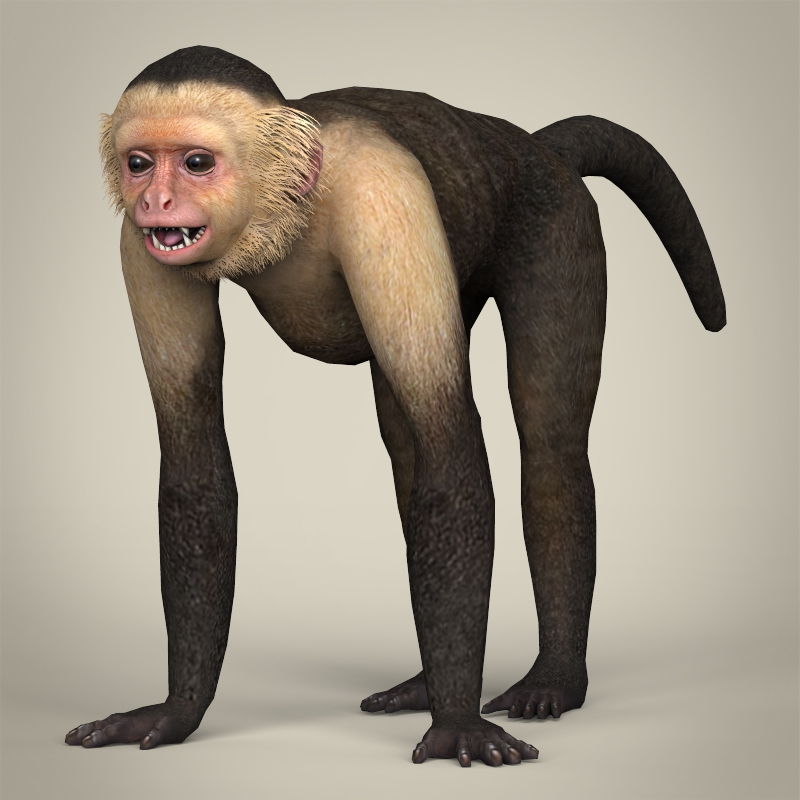 low poly realistic capuchin monkey 3d model 3ds max fbx c4d lwo ma mb obj 216871