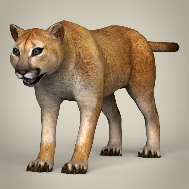 low poly realistic mountain lion 3d model 3ds max fbx c4d lwo ma mb obj 216880